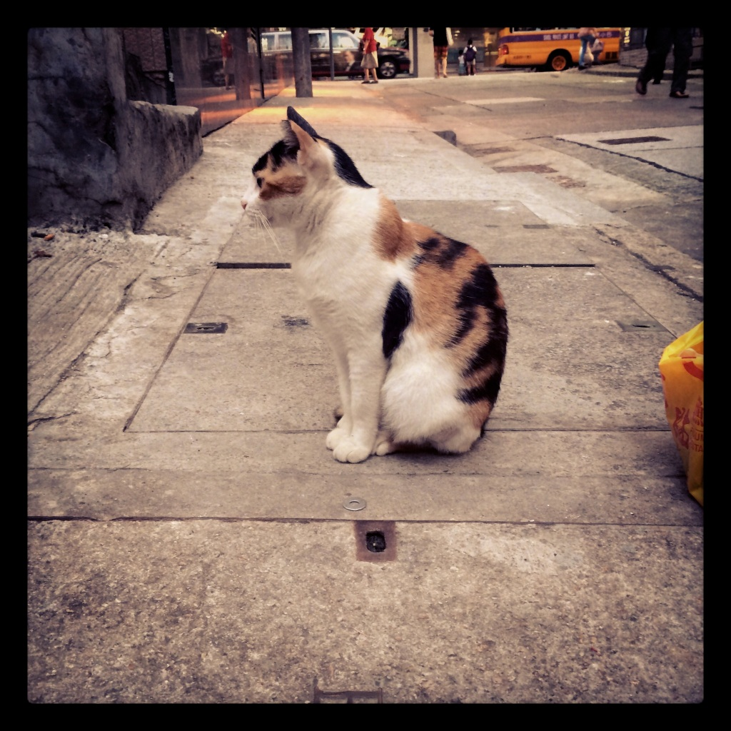 Cats of HK LisaDeviAdventures