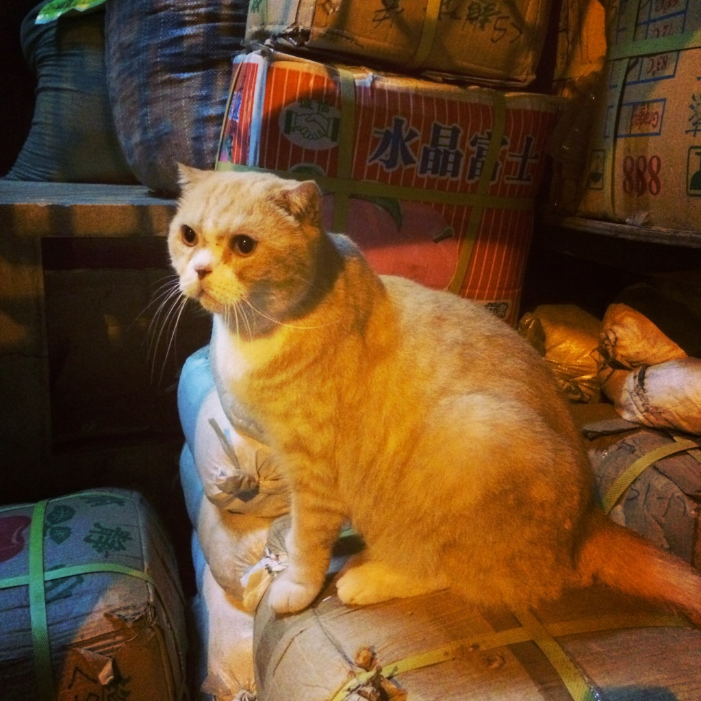 Cats of HK LisaDeviAdventures