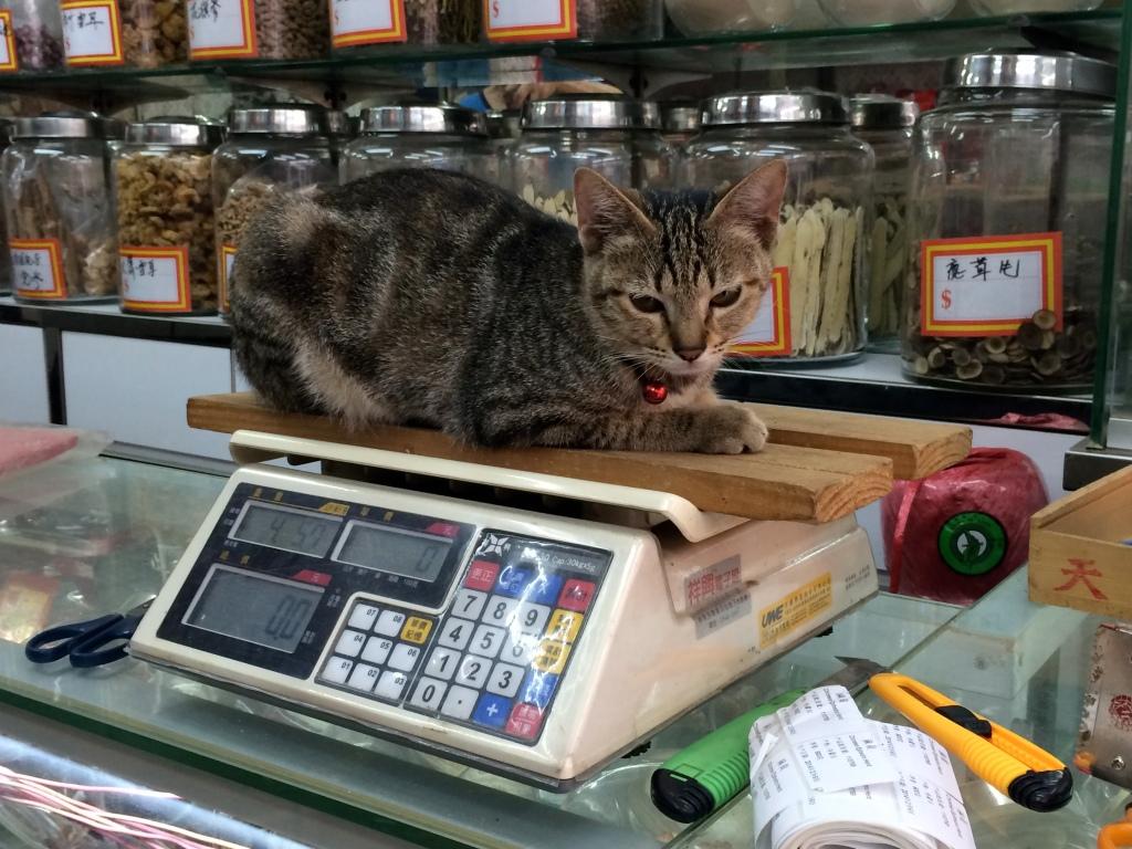 Bodega Cats of HK LisaDeviAdventures