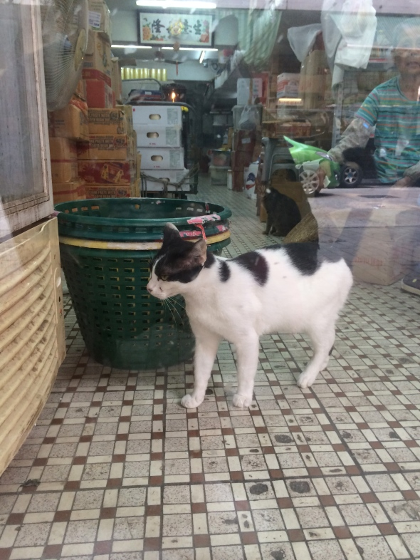 Cat in Kowloon City, Hong Kong