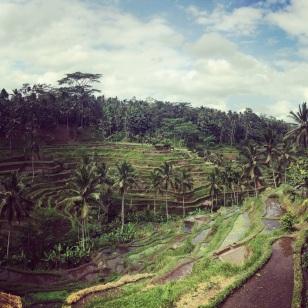 Rice Paddies near Ubud, Bali LisaDeviAdventures