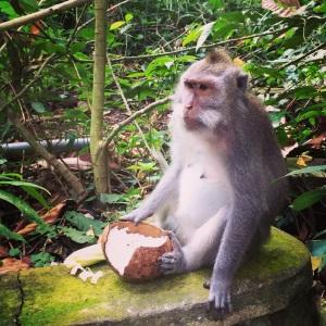 Monkey Forest Ubud Bali LisaDeviAdventures
