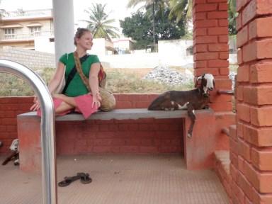 LisaDeviAdventures in India Lisa Kazmer